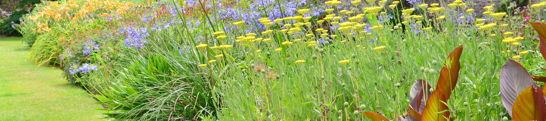 Blooming range of Perennials