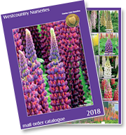 Download Westcountry Nurseries Catalogue Now